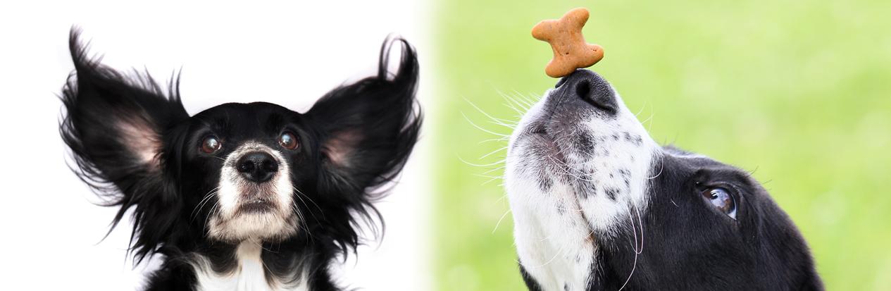 schnüffel Hunde